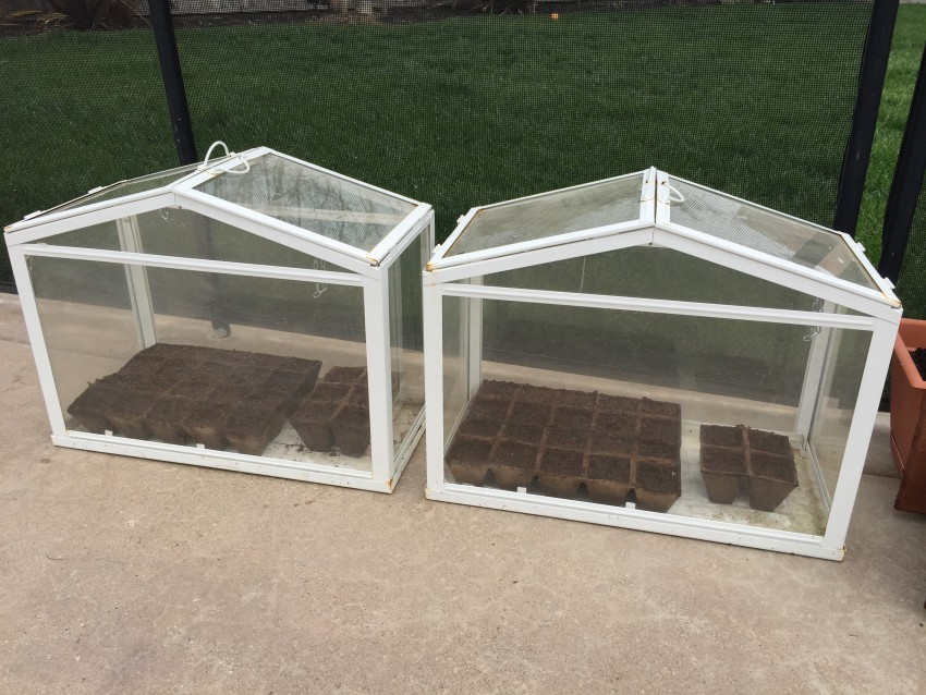 Mini greenhouses for fast growing seeds to plants
